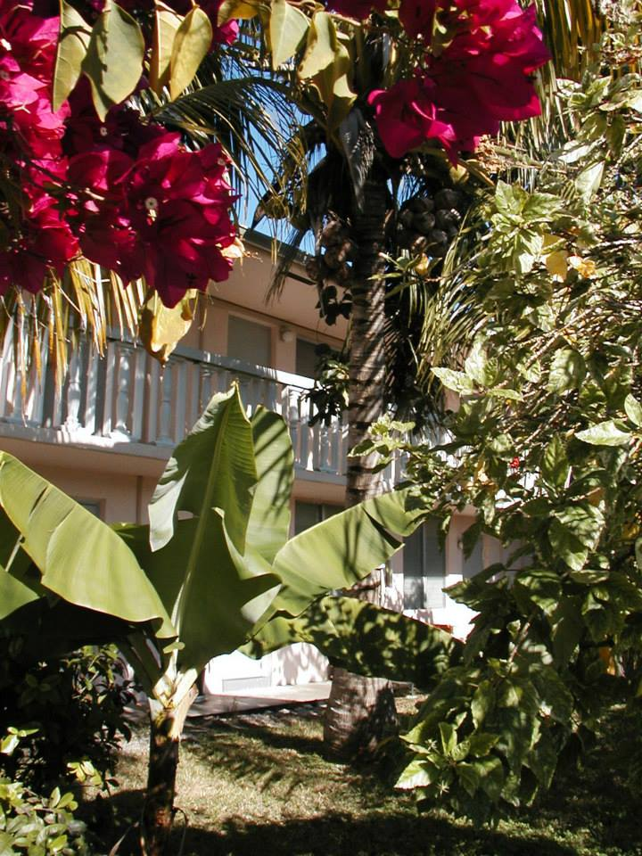 Bermuda House Apartments for rent