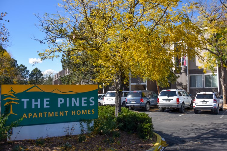 The Pines Image 5